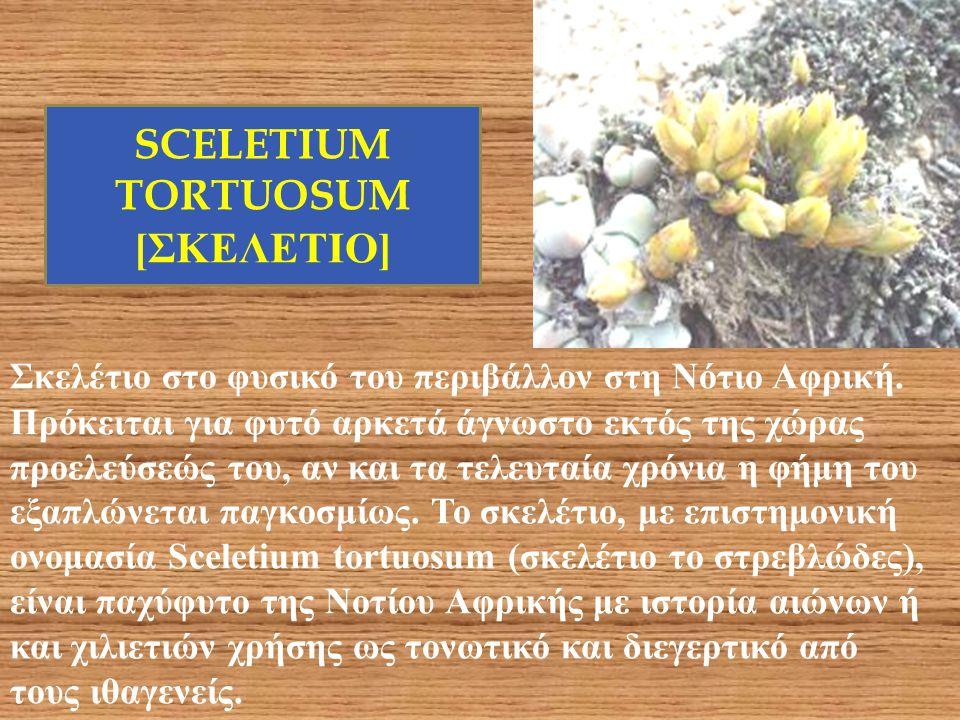 SCELETIUM TORTUOSUM [ΣΚΕΛΕΤΙΟ]